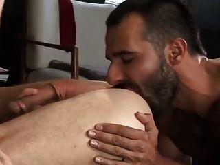 Turkish Stud