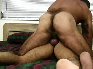 Muscle Hairy Bear Having Babreback Sex