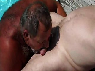 Pool Older Bear Suck
