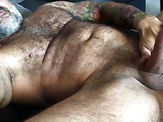 Ursao Mostrando A Ferramenta